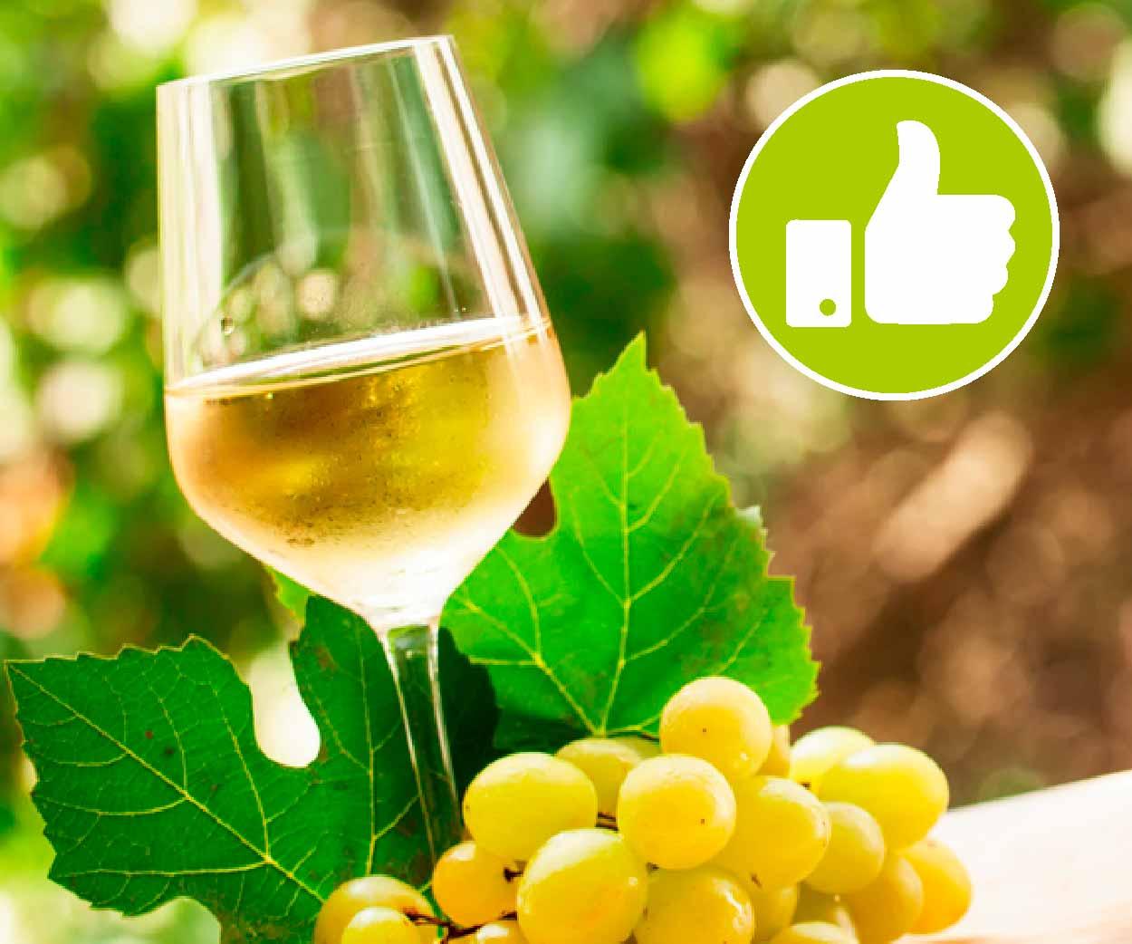 Impatti del progetto Itaca viticoltura sostenibile Veneto