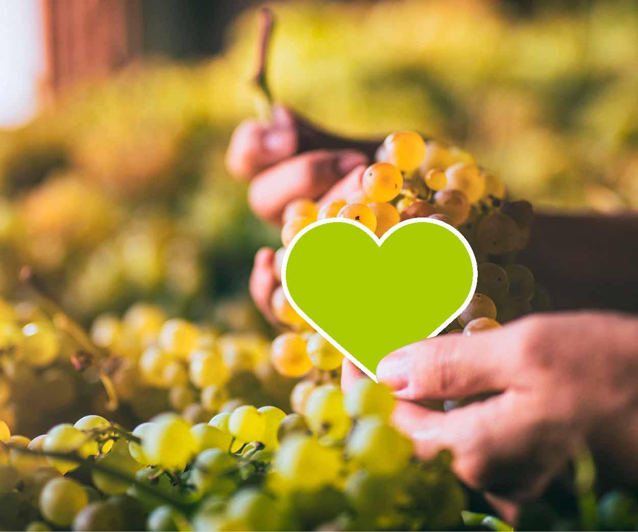 Partners progetto Itaca viticoltura sostenibile Veneto